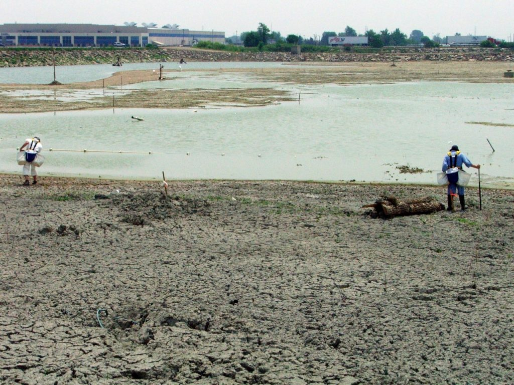 Sewage treatment wetland