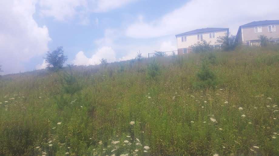 Steep slope planting