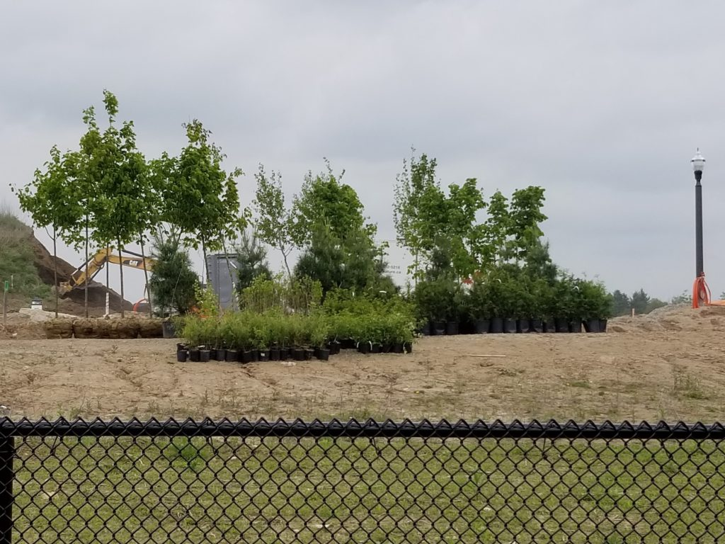 Trees and shrubs ready to plant
