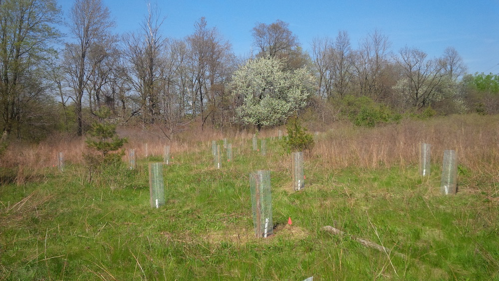 Tree planting protection