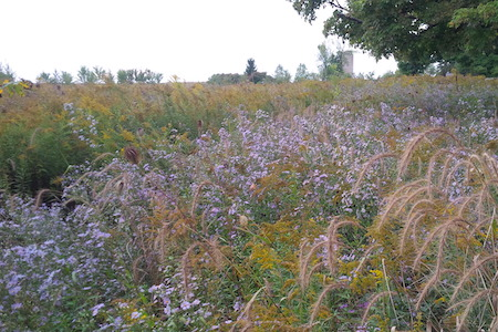 ecological restoration in Ontario