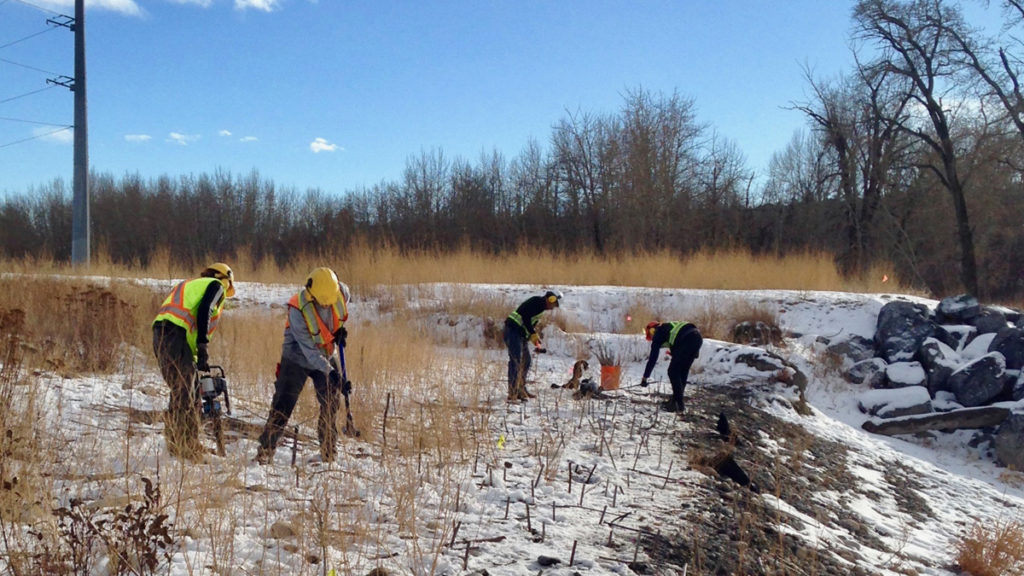 Late season creek planting