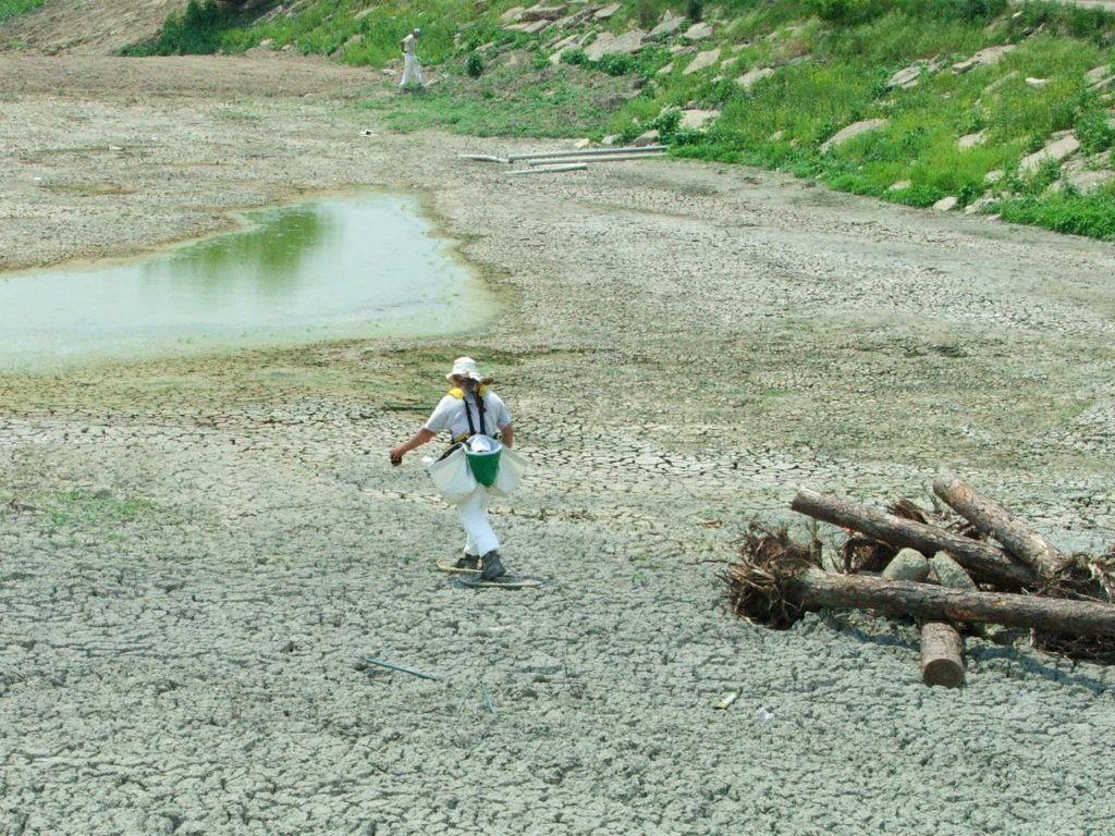 Seeding in artificial wetland
