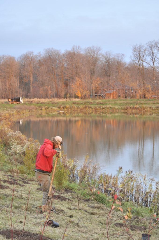 Stormwater pond planting