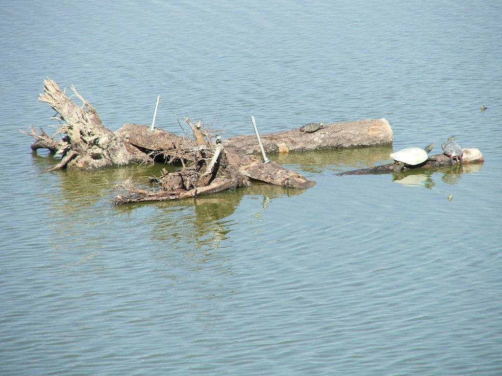 Floating habitat logs