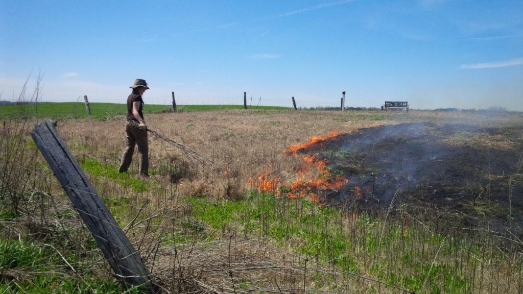 Meadow field burning