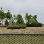 Delivery of native trees